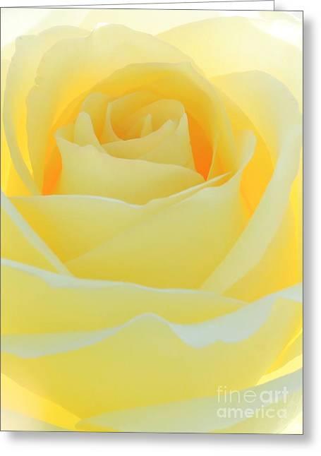 Delicate Yellow Rose Greeting Card by Sabrina L Ryan