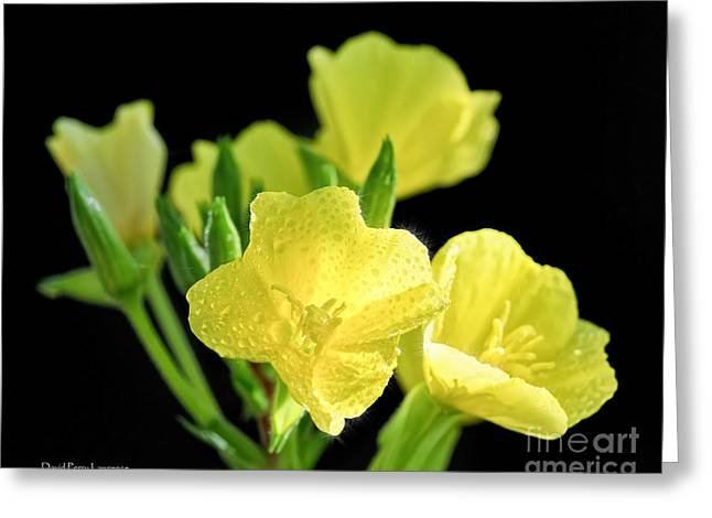 Delicate Yellow Wildflowers In The Sun Greeting Card
