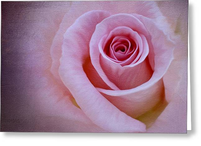 Delicately Pink Greeting Card by Ivelina G