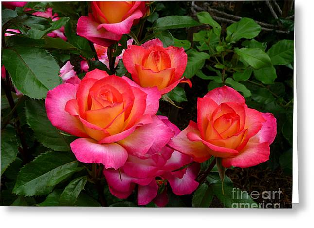 Delicious Summer Roses Greeting Card by Richard Donin