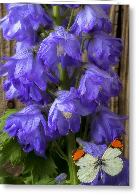 Delphinium And Butterfly Greeting Card by Garry Gay