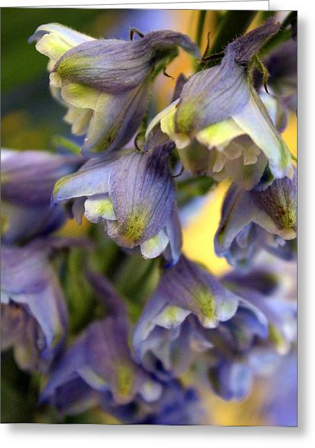 Delphinium Blue Greeting Card by Joseph Skompski