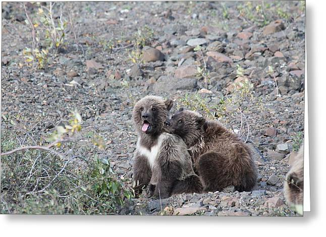 Denali Grizzly Cubs Greeting Card