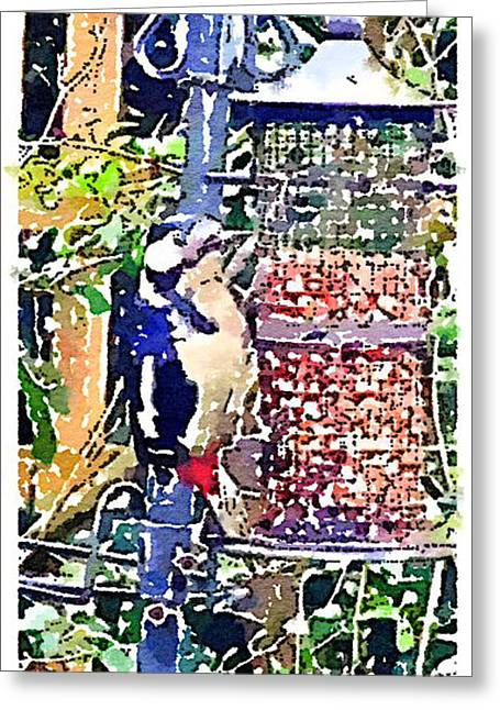 Dendrocopos Major 'great Spotted Woodpecker' Greeting Card