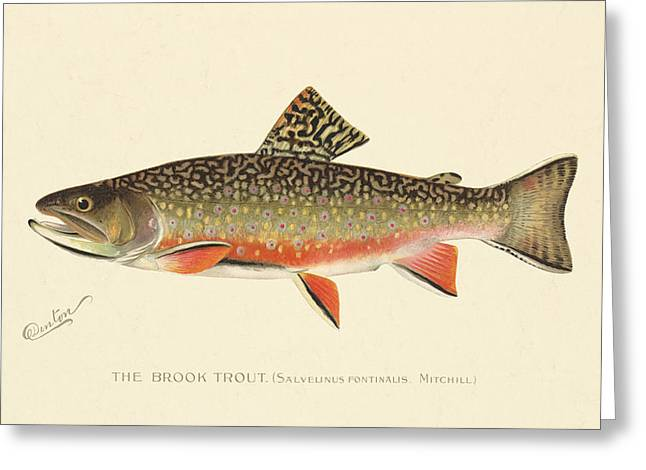 Denton Brook Trout Greeting Card