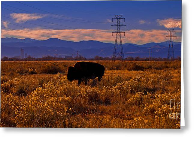 Denver Bison Greeting Card