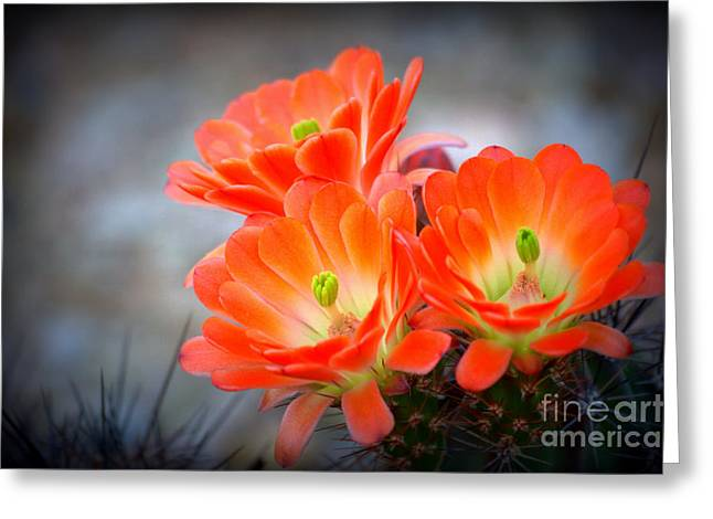 Desert Ablaze  Greeting Card by Ruth Jolly