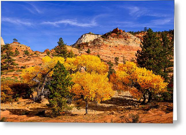 Desert Autumn Greeting Card by Greg Norrell