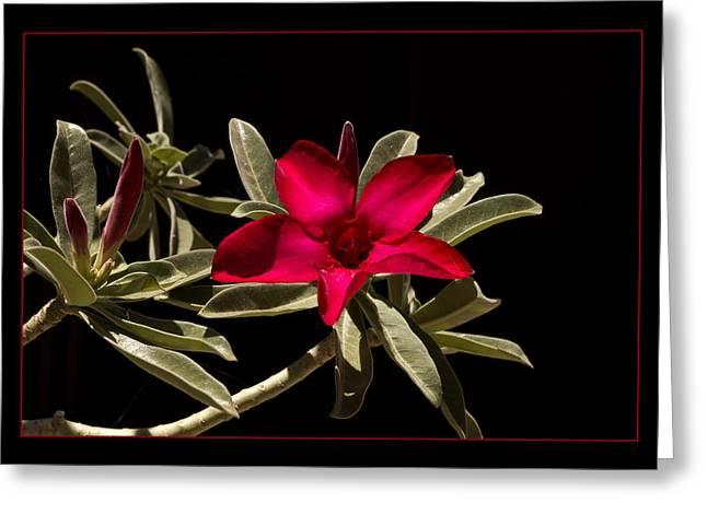 Desert Azalea Greeting Card