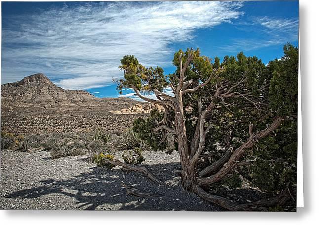 Desert Beauty Greeting Card by Jen Morrison