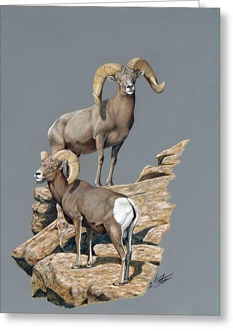 Desert Bighorn Rams Greeting Card