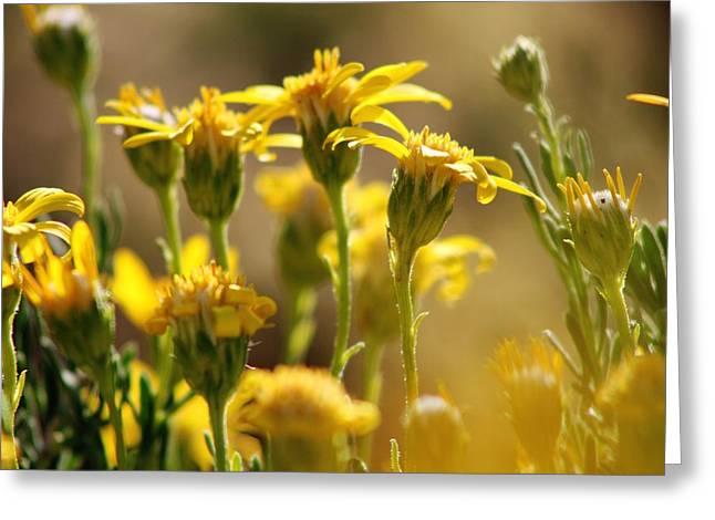 Desert Bloom At Black Rock Canyon In Jtnp Greeting Card by Carolina Liechtenstein