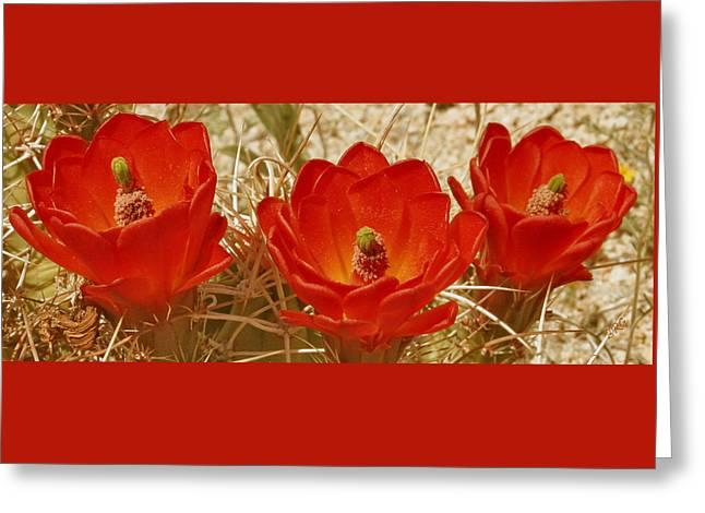 Desert Blooms Greeting Card by Ben and Raisa Gertsberg