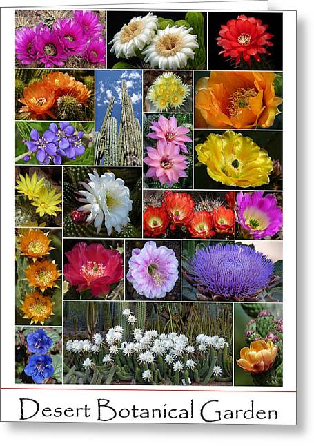 Desert Botanical Garden Greeting Card