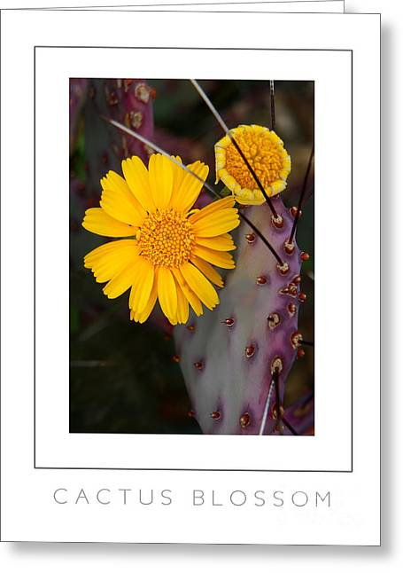 Cactus Blossom Poster Greeting Card