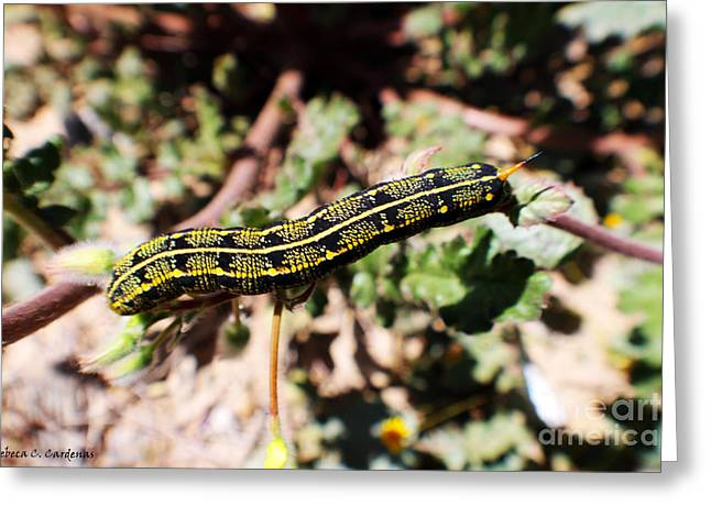 Desert Caterpillar Greeting Card by Rebecca Christine Cardenas