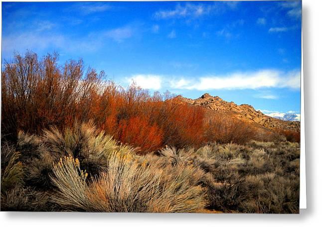 Desert Colors Greeting Card by Marilyn Diaz