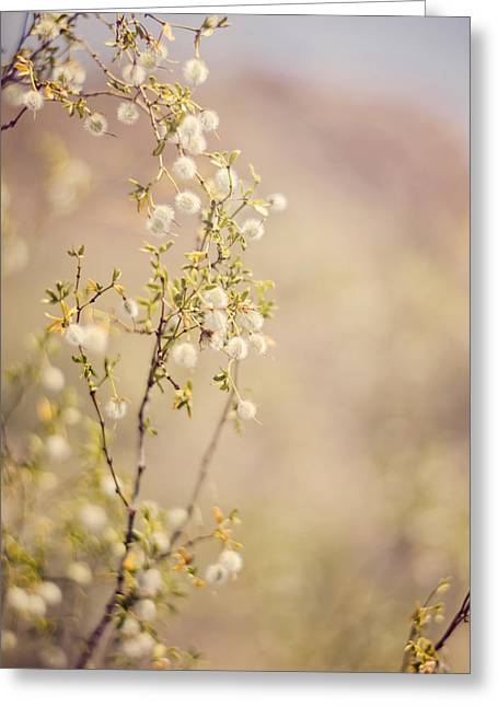 Desert Delicates Greeting Card