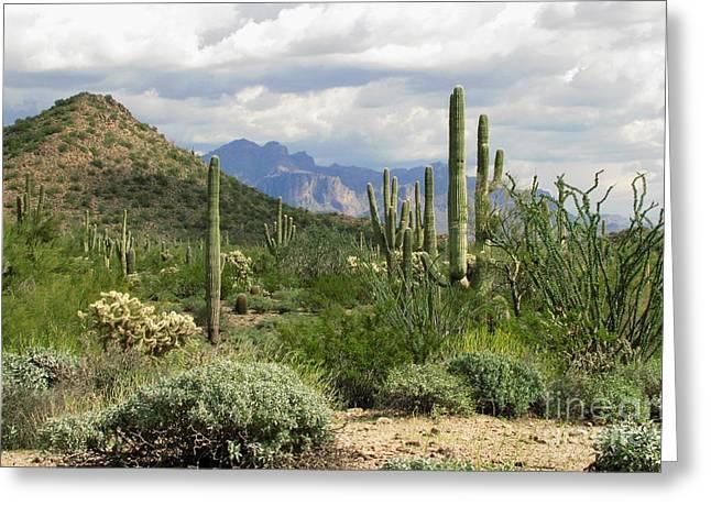 Desert Delight Two Greeting Card