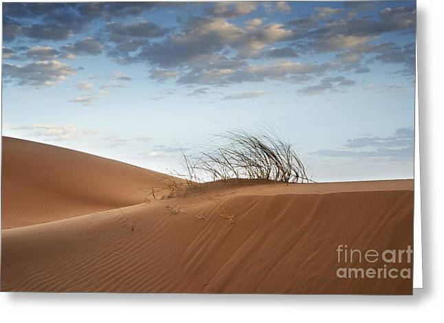 Desert Detail Greeting Card