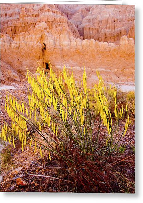 Desert Flower Greeting Card by Jim Snyder