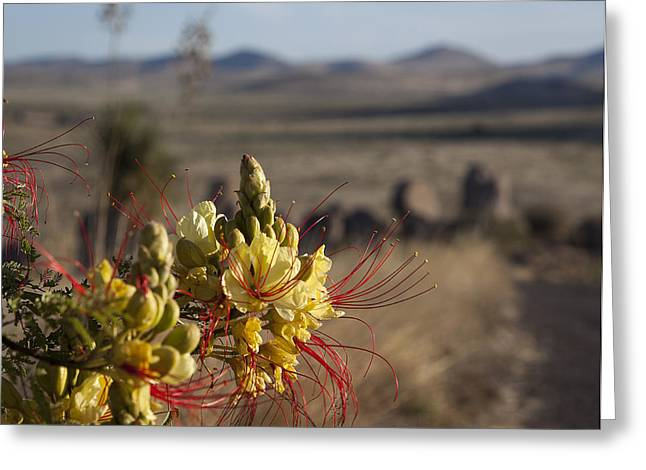 Desert Flowers Greeting Card by Amber Kresge
