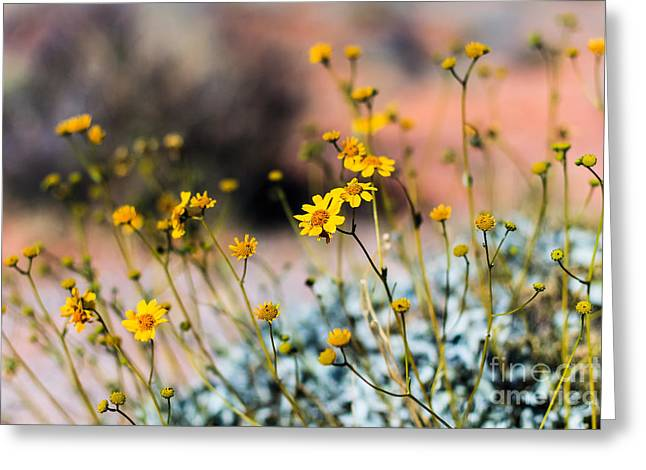 Desert Flowers Greeting Card