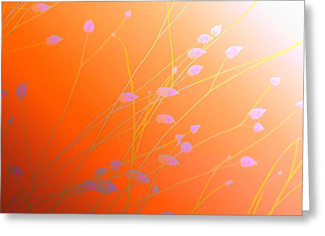 Desert Flowers Greeting Card by Holly Kempe