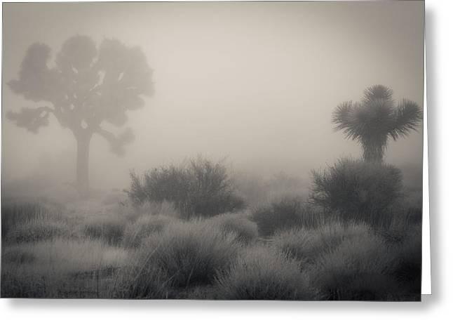 Desert Fog / No Watermark Greeting Card