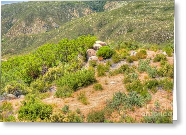 Desert Greenery Greeting Card by Deborah Smolinske