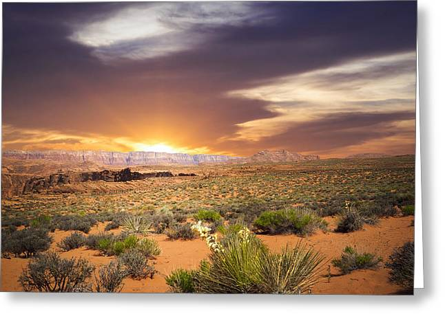 An Evening In The Desert Greeting Card by Aged Pixel