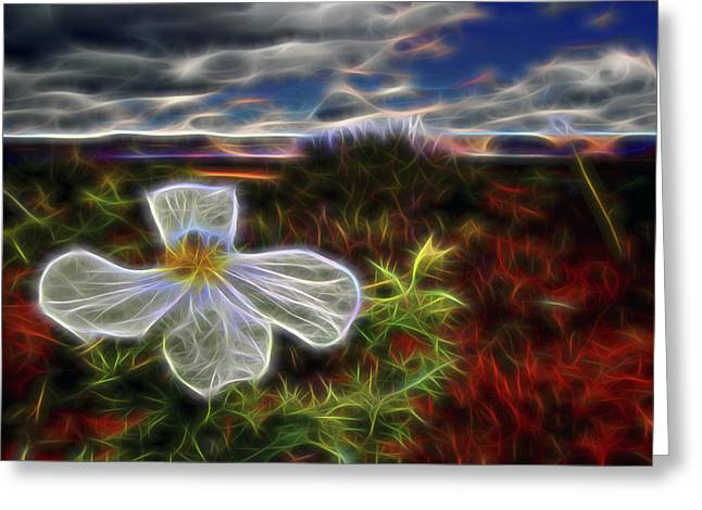 Desert Primrose 1 Greeting Card by William Horden