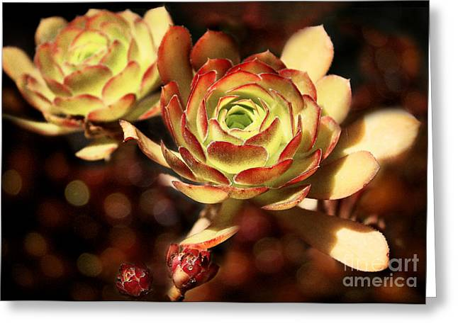 Desert Roses Greeting Card