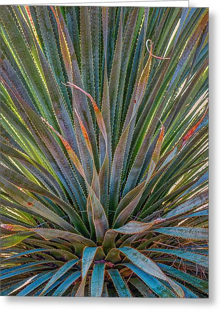 Desert Spoon Greeting Card by Beverly Parks