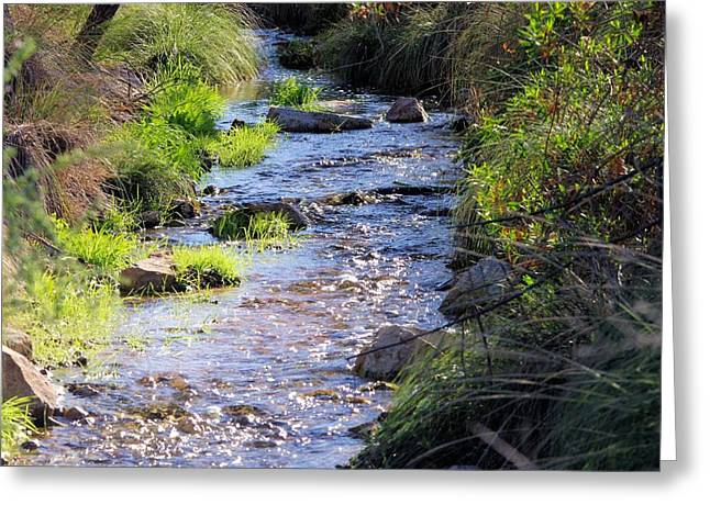 Desert Stream Greeting Card