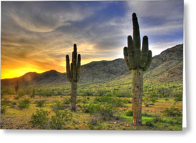 Desert Sunset Greeting Card by Dan Myers