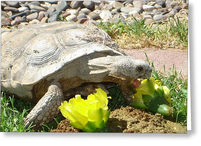 Desert Tortoise Delight Greeting Card