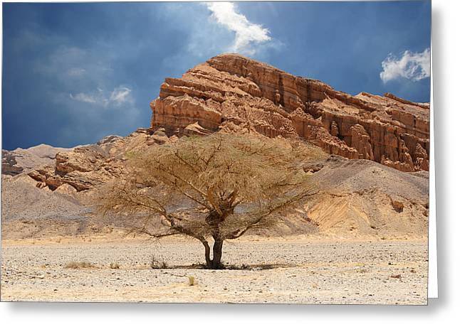 Desert Tree And Mountains Greeting Card