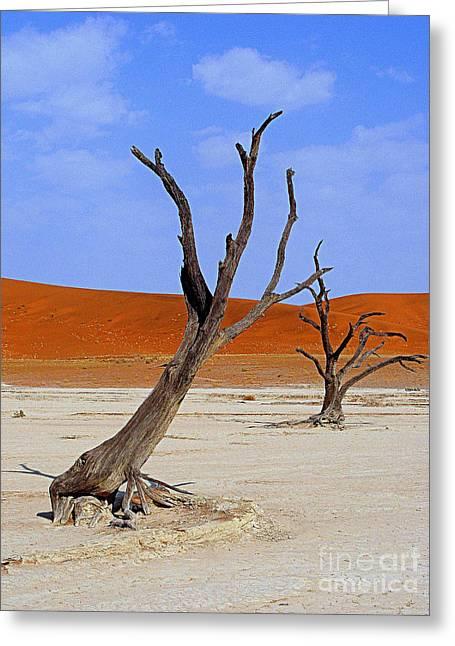 Desert Trees Greeting Card by Noa Yerushalmi