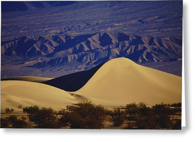 Desert Wave Greeting Card by Michael Courtney
