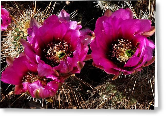 Desert Wildflower Greeting Card by Diane Lent