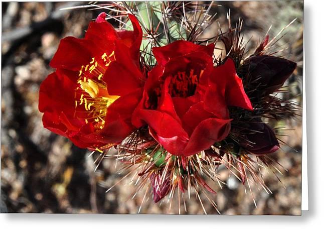 Desert Wildflowers Greeting Card by Diane Lent