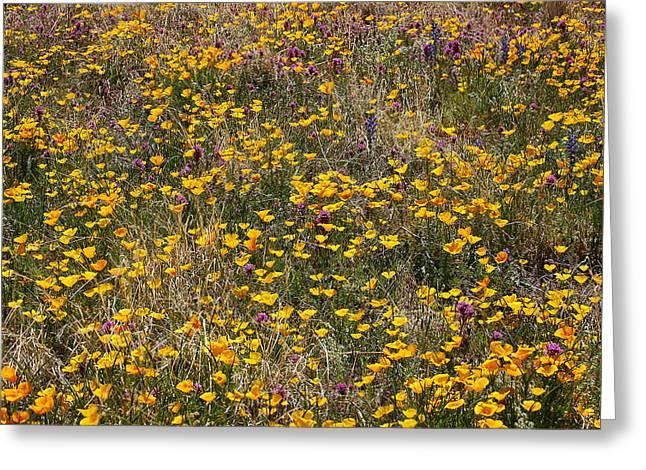 Desert Wildflowers Greeting Card by Robert Ashbaugh