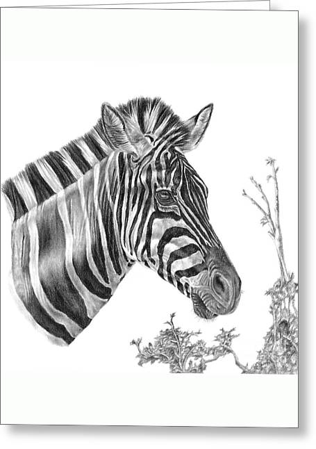 Designer Stripes Greeting Card