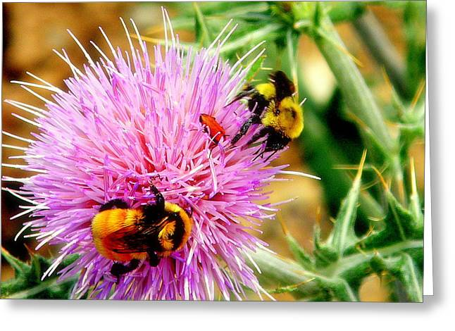 Greeting Card featuring the photograph Desirable Thistle by Antonia Citrino