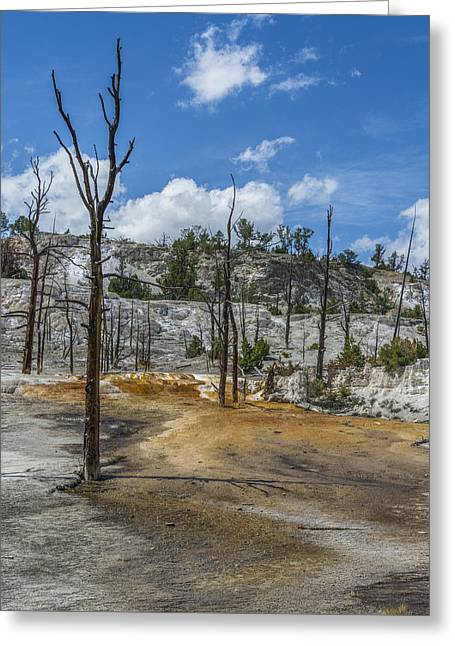 Desolation Yellowstone National Park Greeting Card