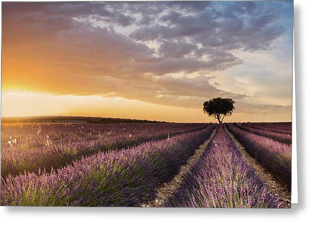 Destination Lavender Greeting Card