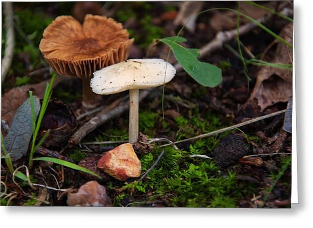 Destroying Angel Mushroom Greeting Card by Chris Flees
