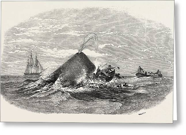 Destruction Of The Larboard Boat Of The Ann Alexander Greeting Card by English School