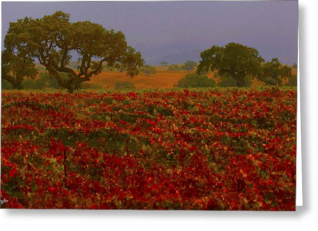 Detail Autumn Vineyard Santa Ynez California  Greeting Card by Barbara Snyder